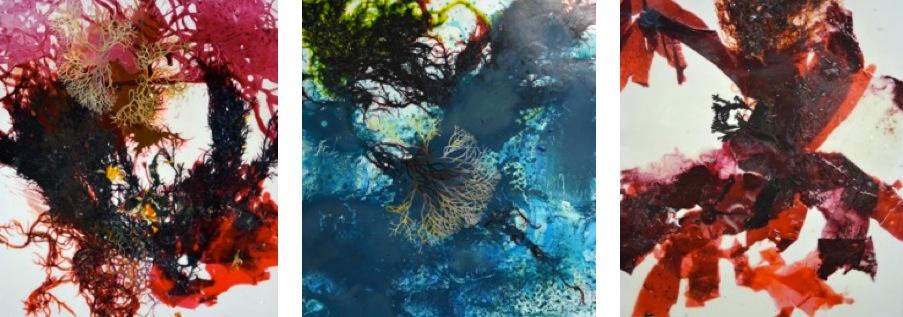 Michael Porter, Seaweed Series